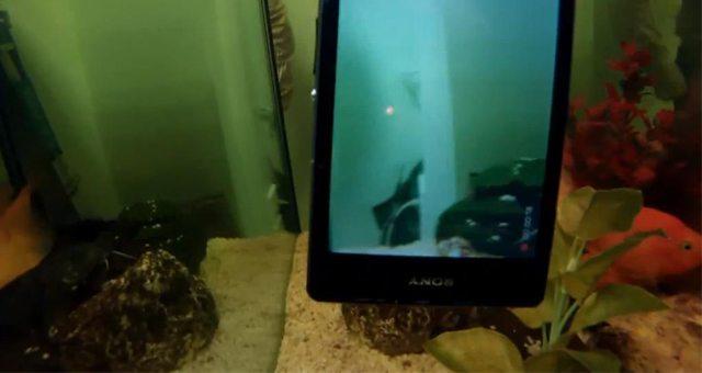 Съемка видео на Sony Xperia Z1 в аквариуме